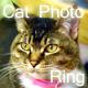 猫写真Ring