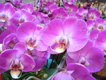 22012013_Telford Garden Orchid Show00021