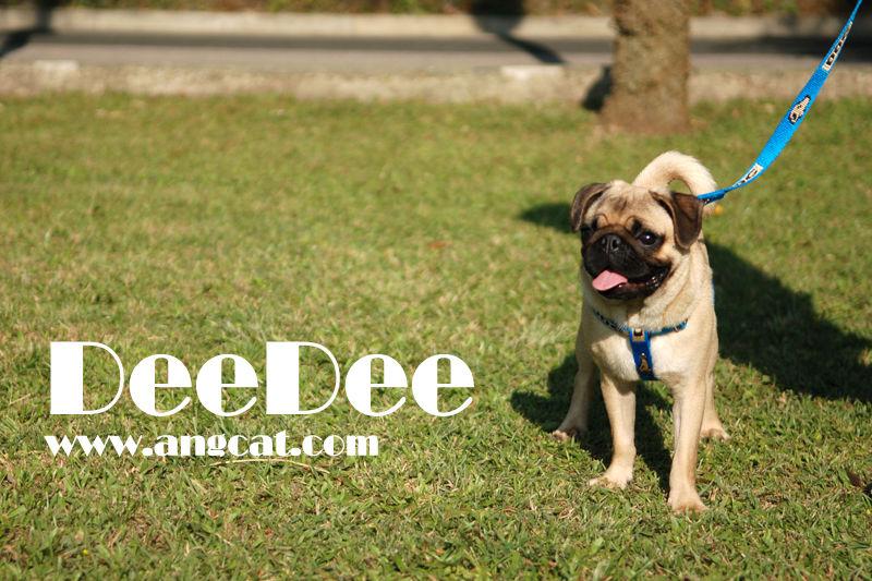 http://images4.fotop.net/albums2/angcat/dogdeedee/DSC_9700_deedee.jpg