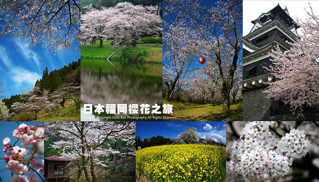 日本福岡櫻花之旅2013