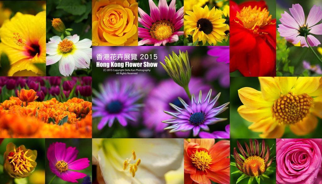 香港花卉展覽2015