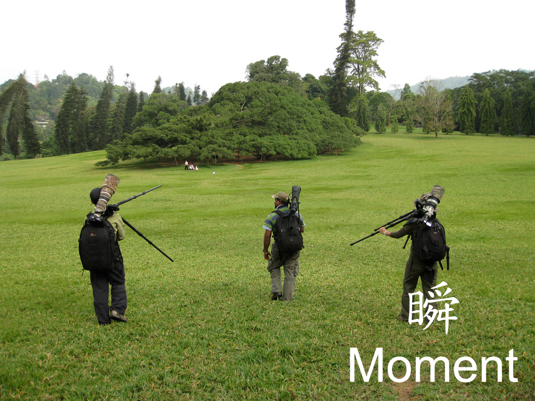 鳥迷瞬遊 2010
