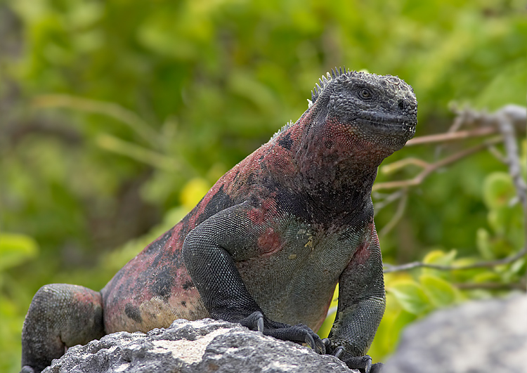 Widlife on Galapagos Islands