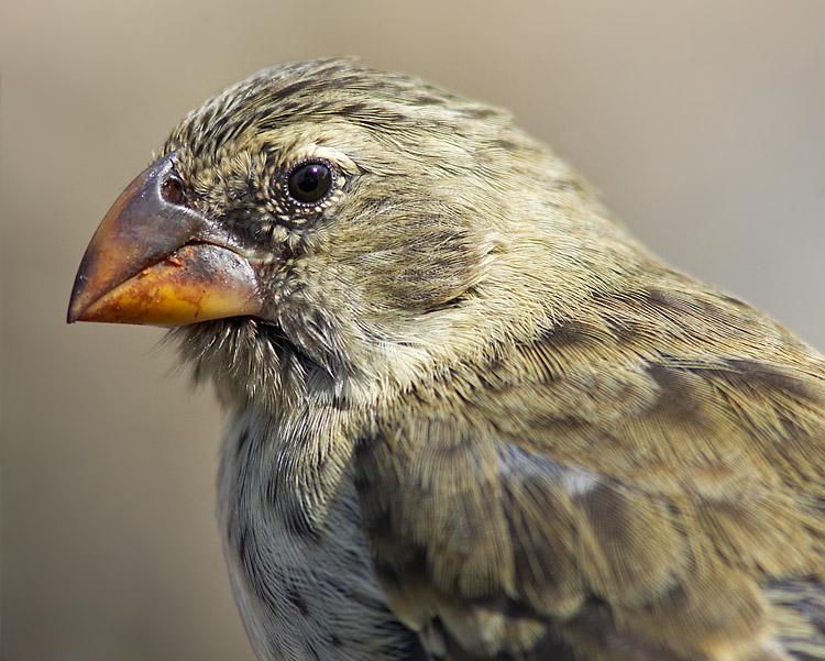 加拉帕戈斯群島的鳥
