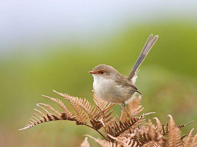 「人在塵世,鳥於自然」