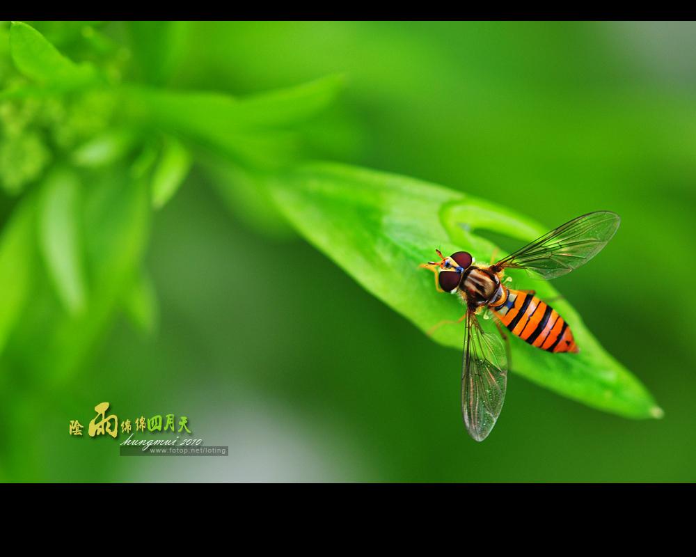 http://images4.fotop.net/albums4/loting/loting0152/loting0152005.jpg