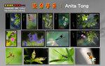 K03-Anita Tong