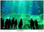 海洋公園之旅 2011