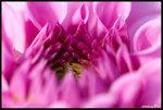 annie-flowerfair06-13