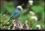 bird_20200209_03s