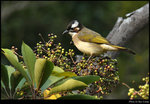 bird_20200217_10s