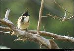 bird_11s