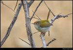bird_20200224_03s