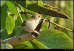 bird_20210214_03s
