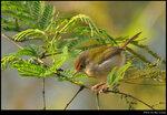 bird_20210218_07s