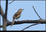bird_20210411_12s