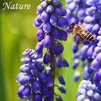 Please click - Ablum about nature
